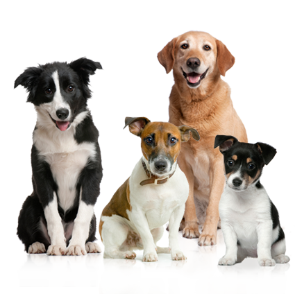Dog png image - HD Wallpapers - PNG HD Images Of Dogs