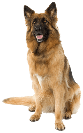 Dog Png Image Picture Download Dogs PNG Image - PNG HD Images Of Dogs