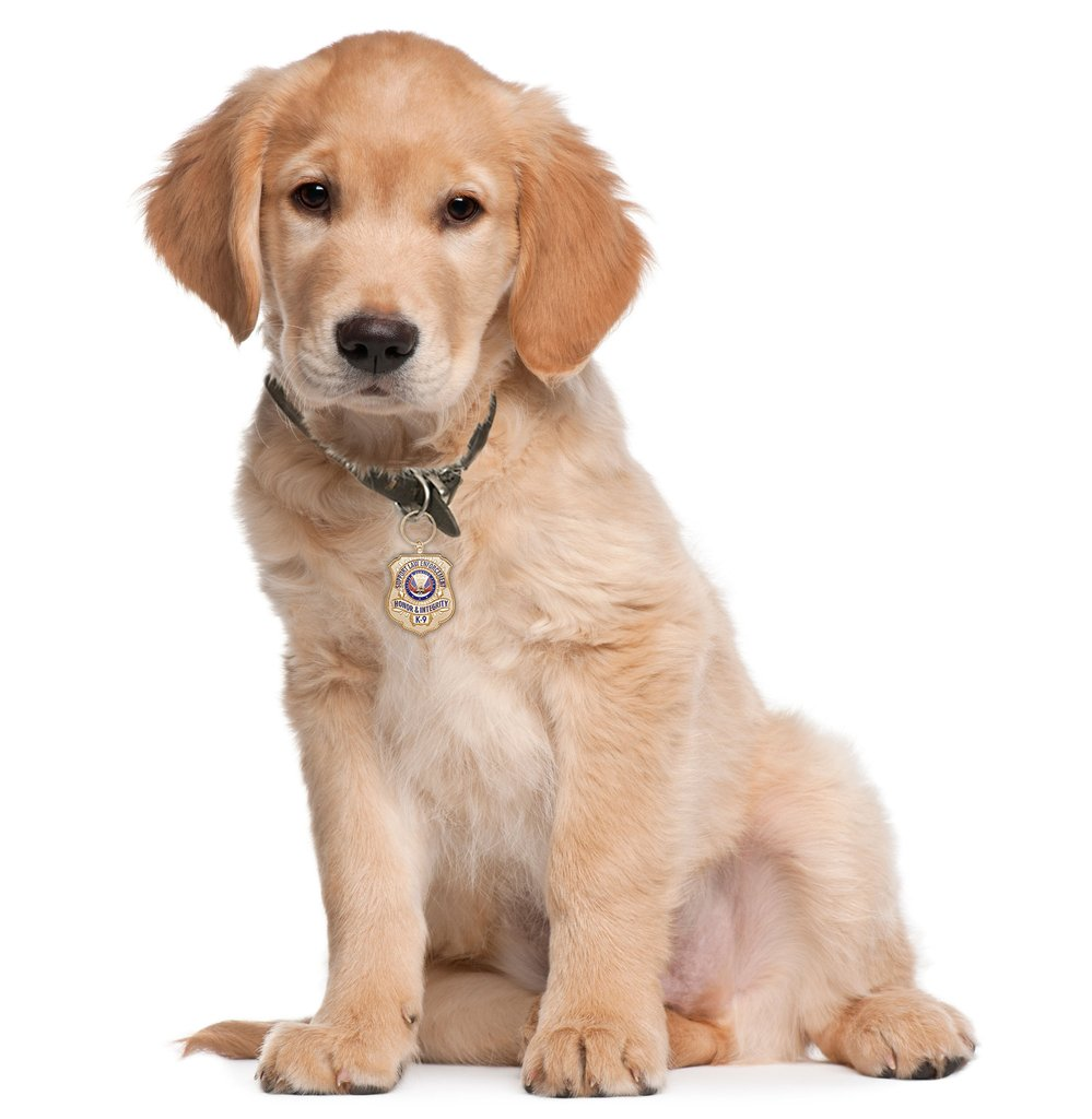 Golden Retriever with Gold-Plated K-9 Honor Badge PlusPng.com  - PNG HD Images Of Dogs