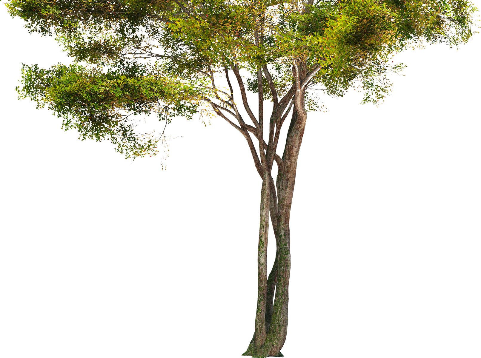 PNG HD Images Of Trees - 126435