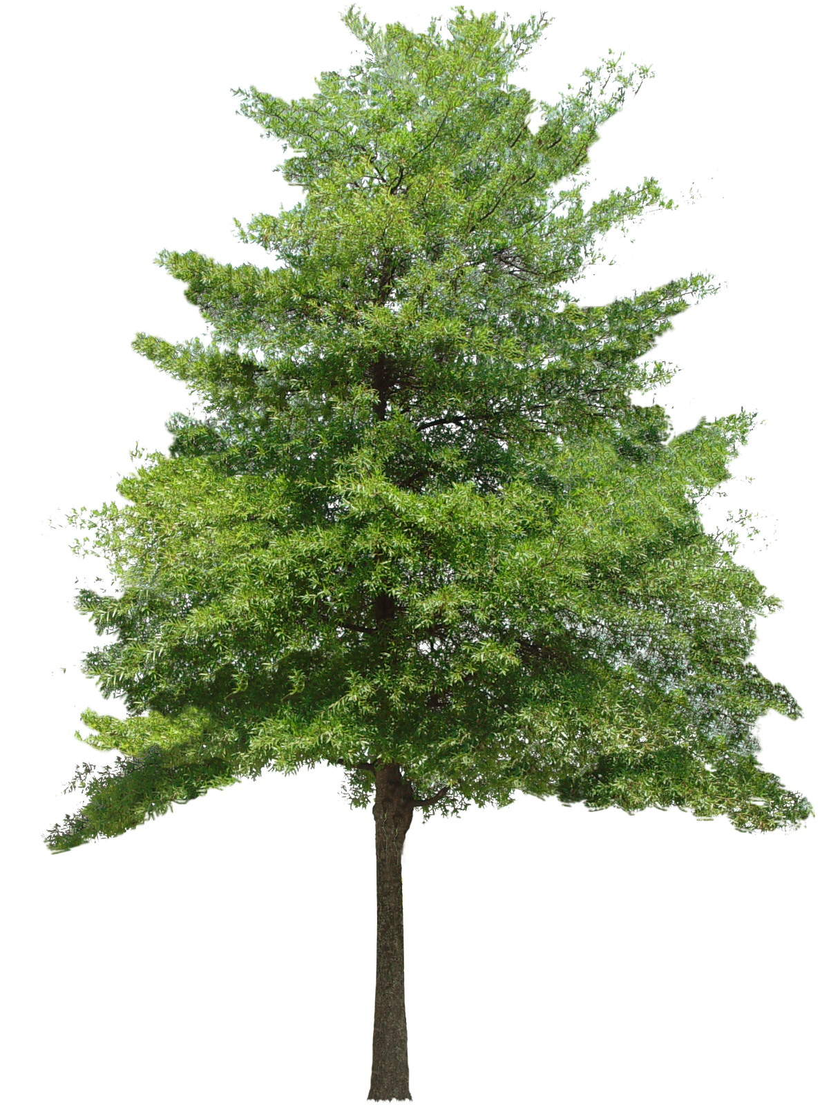 PNG HD Images Of Trees - 126426