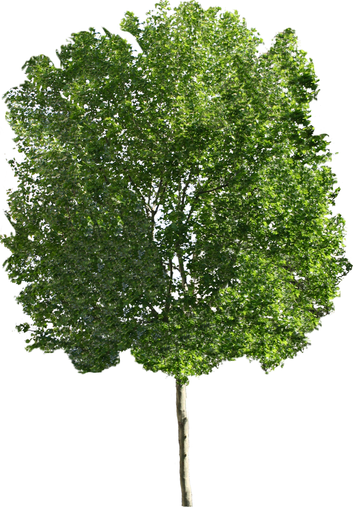 PNG HD Images Of Trees - 126439