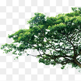 PNG HD Images Of Trees - 126437
