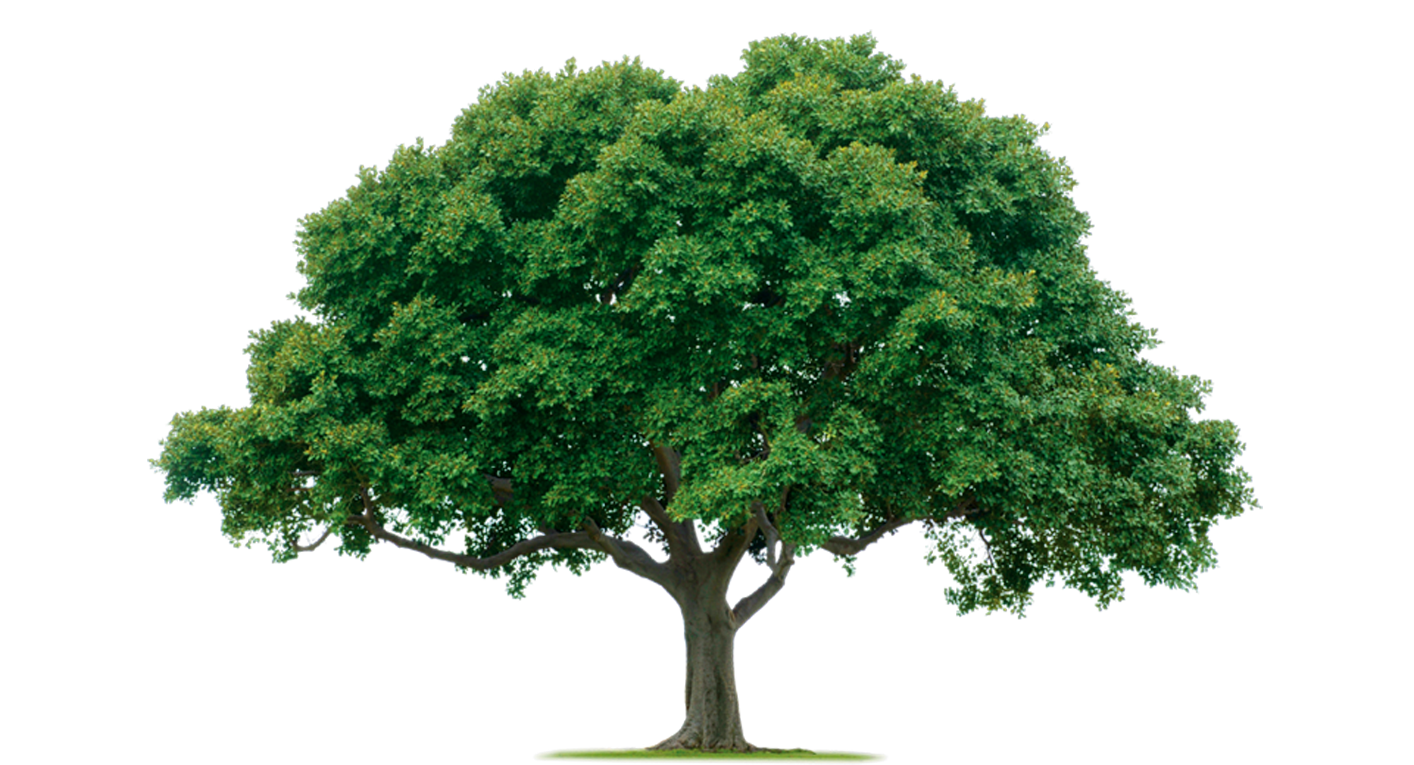 PNG HD Images Of Trees - 126434