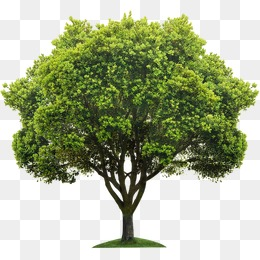 PNG HD Images Of Trees - 126427