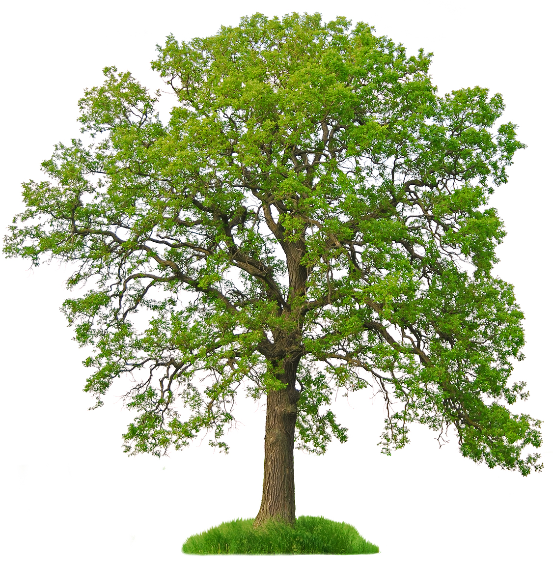 PNG HD Images Of Trees - 126429