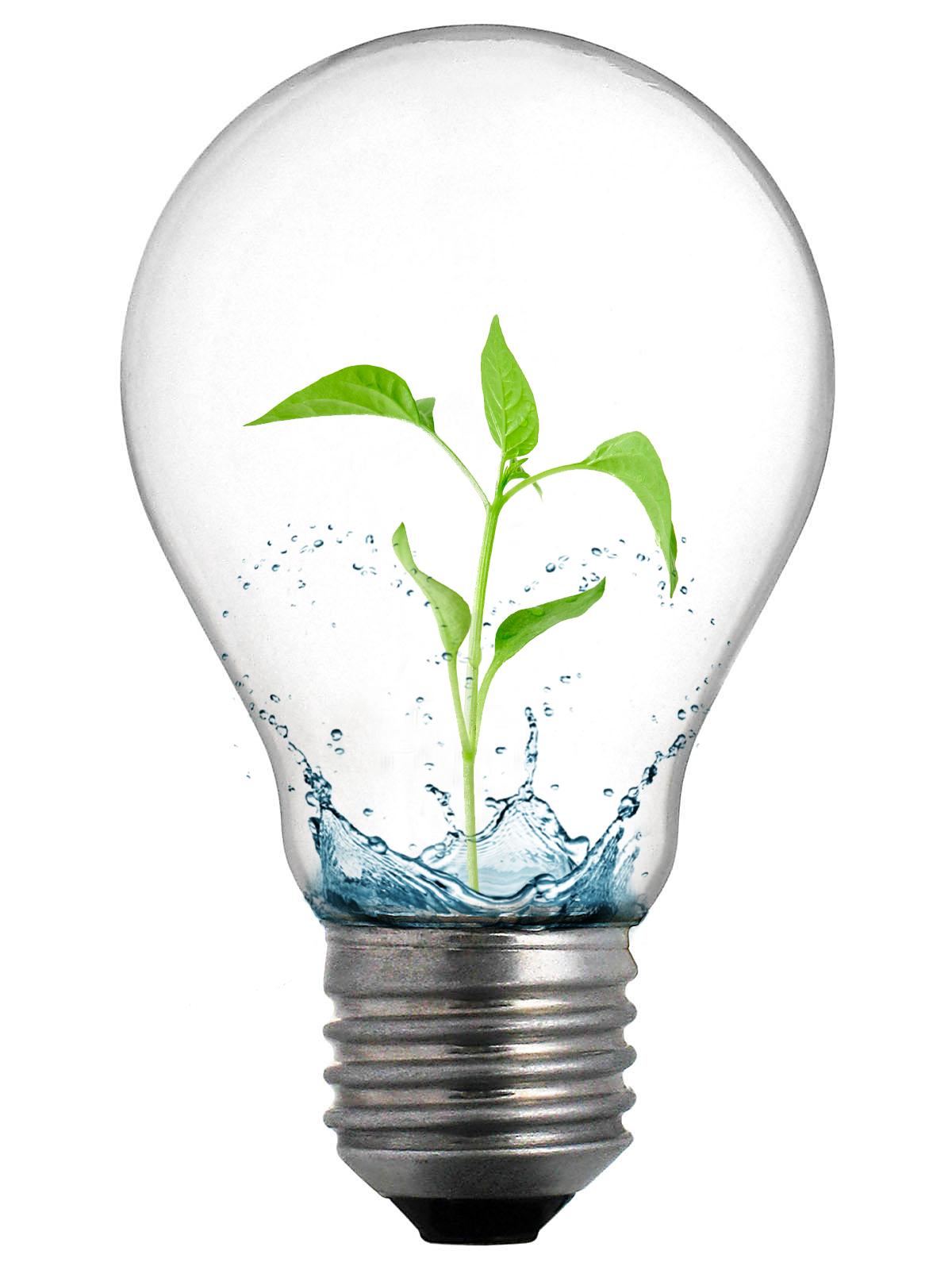 PNG HD Light Bulb - 131085