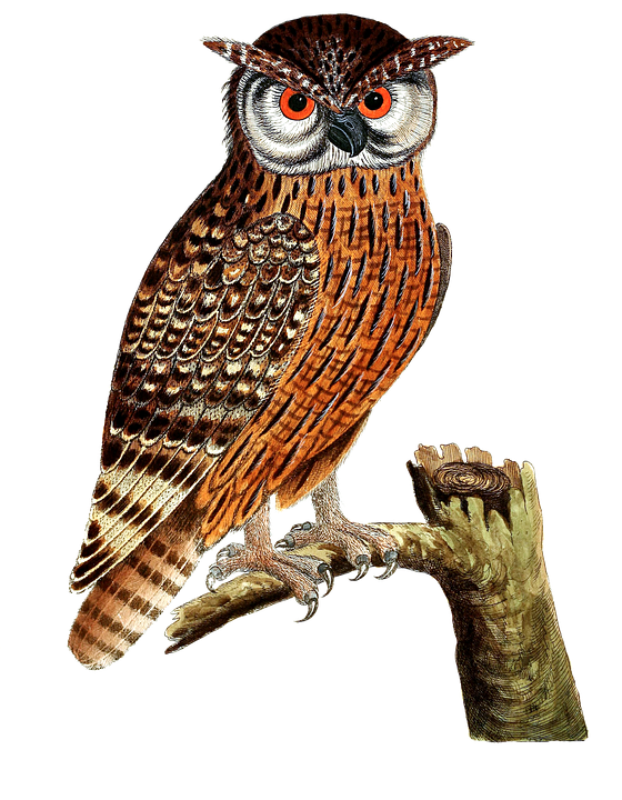 PNG HD Of An Owl-PlusPNG.com-560 - PNG HD Of An Owl