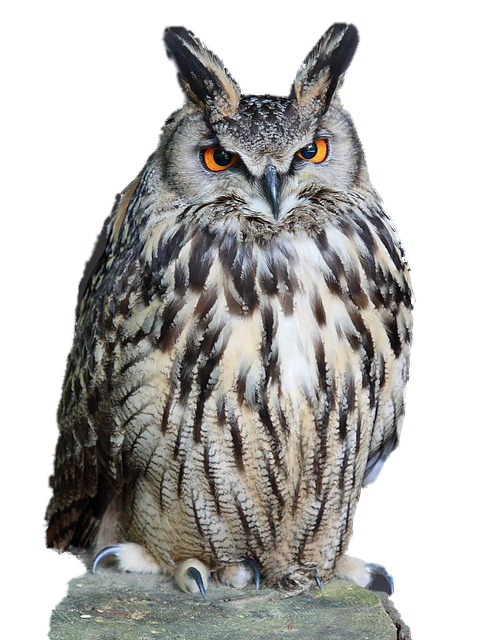 Owl Download PNG - PNG HD Of An Owl