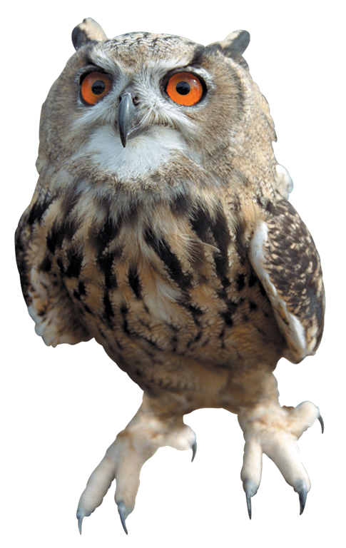 PNG HD Of An Owl