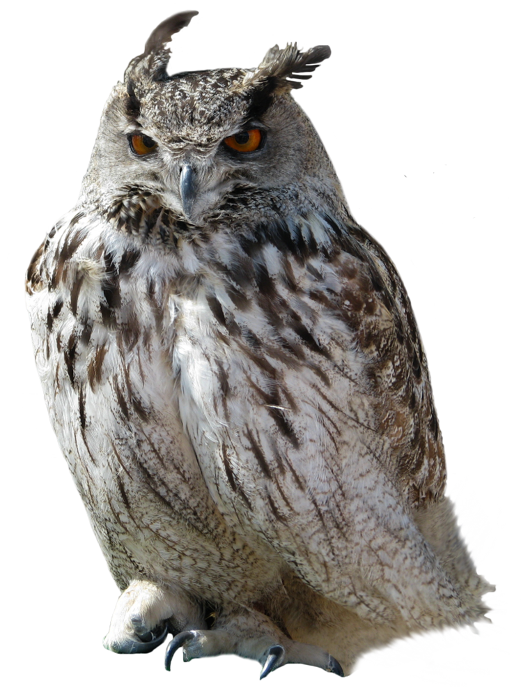 Owl PNG - PNG HD Of An Owl