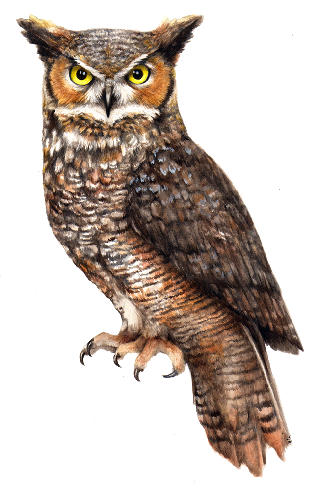 Owl PNG File - PNG HD Of An Owl