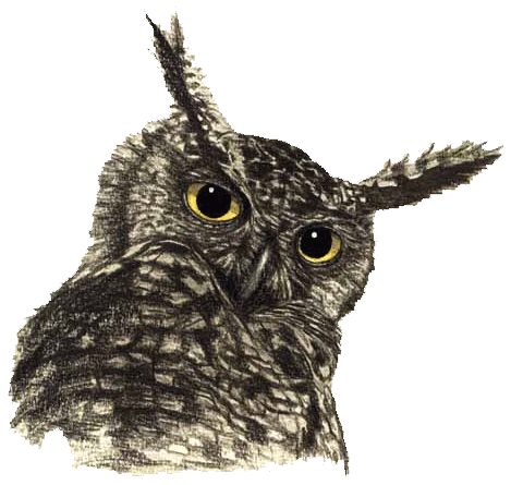 Owl Png File PNG Image - PNG HD Of An Owl