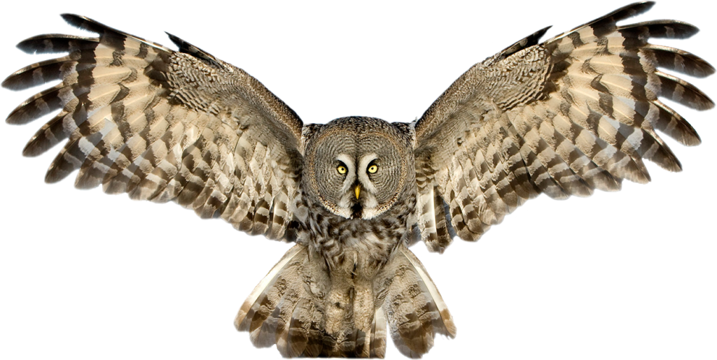 Owl PNG Pic - PNG HD Of An Owl