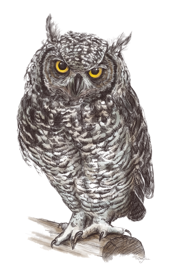 Owl Png Pic PNG Image - PNG HD Of An Owl