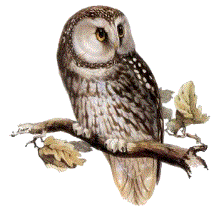 Owl Png PNG Image - PNG HD Of An Owl