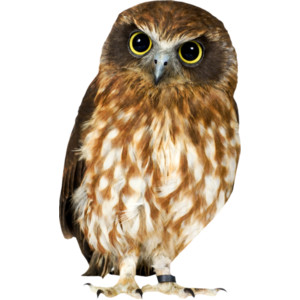 U2022○๑ღஐ♥Monro-Diz♥ஐღ๑○u2022 U2014 «helly_intothenight_el08.png - PNG HD Of An Owl