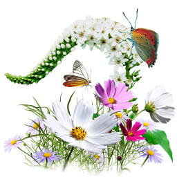 PNG HD Of Butterflies And Flowers - 123659