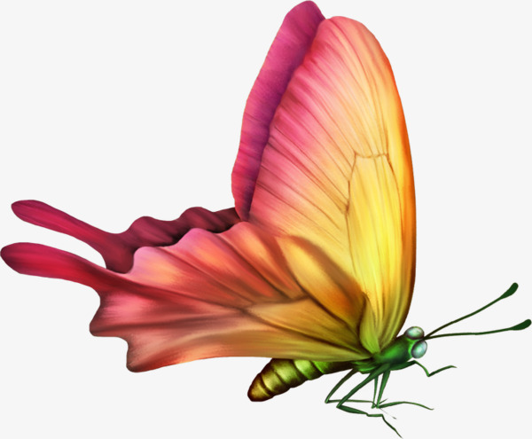 Painted Butterfly HD, Hd, Painted, Butterfly Free PNG Image - PNG HD Of Butterflies And Flowers
