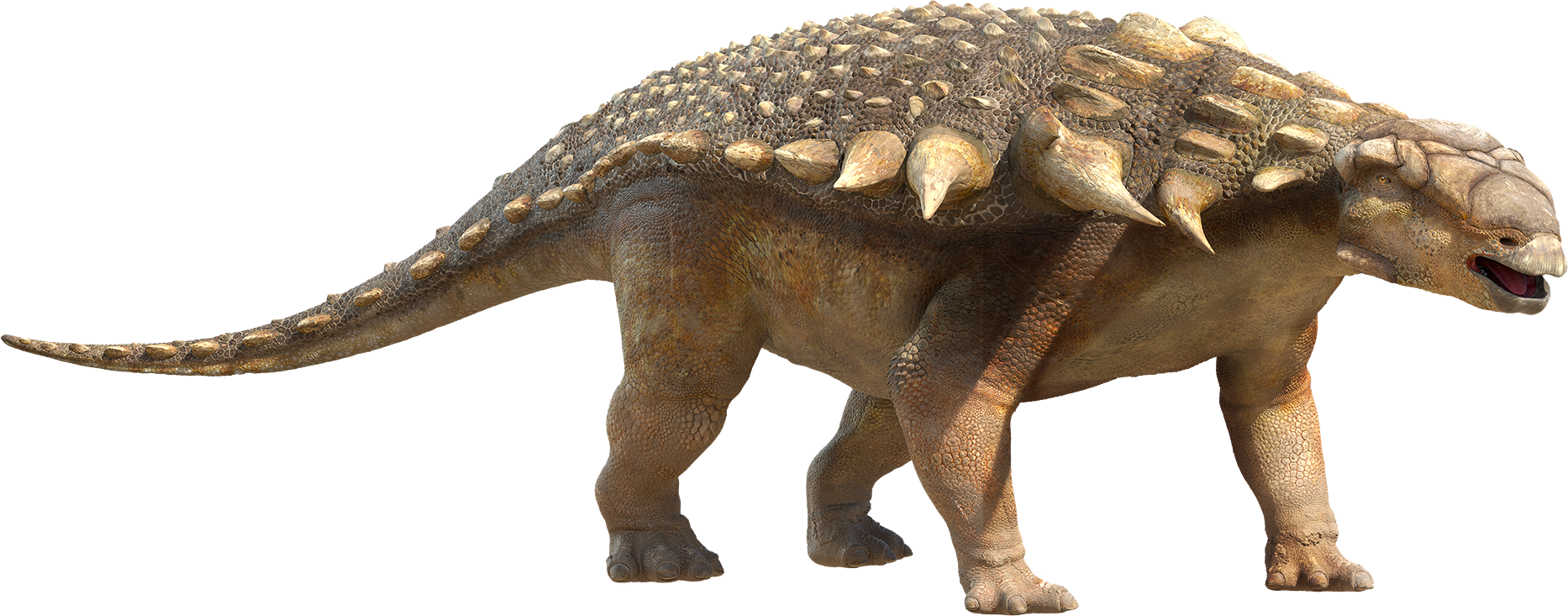 Dinosaurs - Dinosaur, facts, pictures, and information Ankylosaurus facts and pictures
