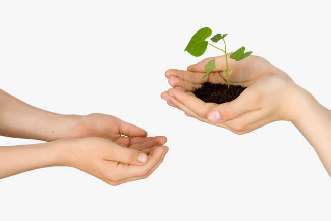 HD hands hold green plants, Hd, Hands, Hold Up PNG Image and Clipart - PNG HD Of Hands