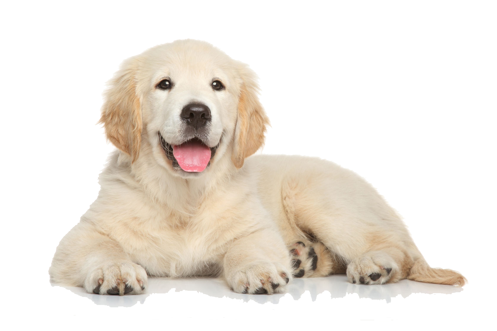 PNG HD Of Puppies Transparent HD Of Puppies.PNG Images ...