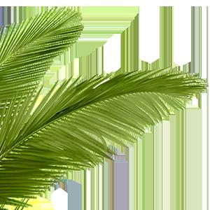 PNG HD Palm Tree Beach - 141596