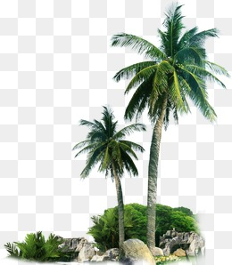 Beach palm tree, Sandy Beach, Palm Tree, Sandy PNG and PSD - PNG HD Palm Tree Beach