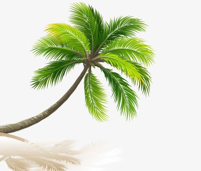 PNG HD Palm Tree Beach - 141584