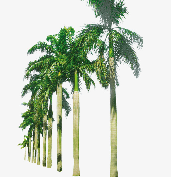 PNG HD Palm Tree Beach - 141595