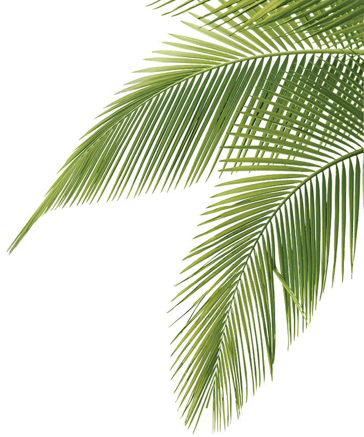 palm_fronds.png PNG Image, 709 × 853 pixels Jungle Plants - PNG HD Palm Tree Beach