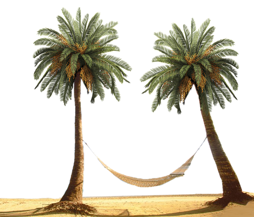 Palm Tree by designway24 PlusPng.com  - PNG HD Palm Tree Beach