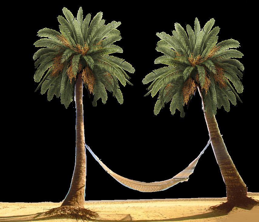 PNG HD Palm Tree Beach - 141579