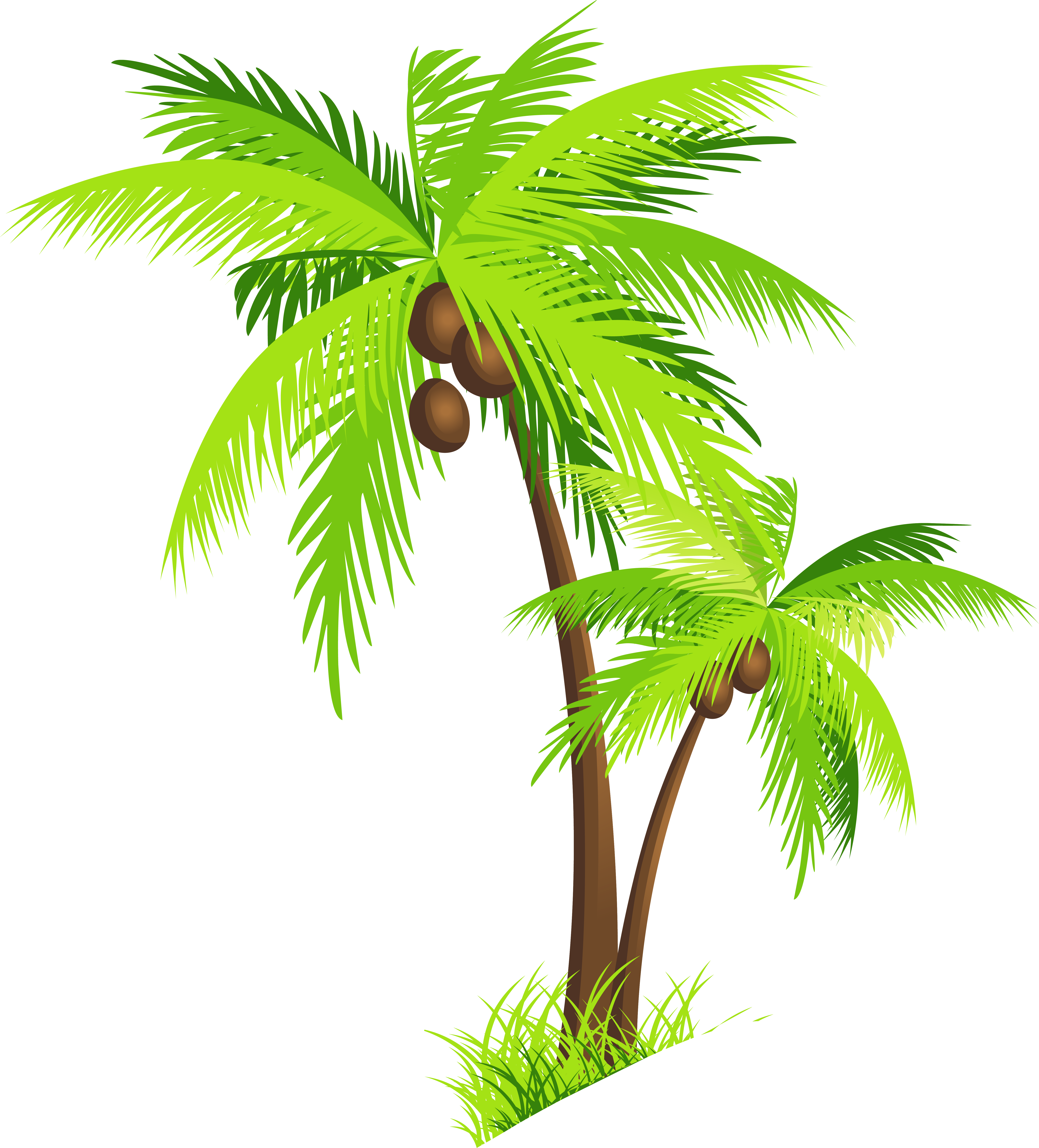 Palm tree coconut clipart free images - PNG HD Palm Tree Beach