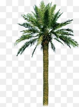 PNG HD Palm Tree Beach - 141586