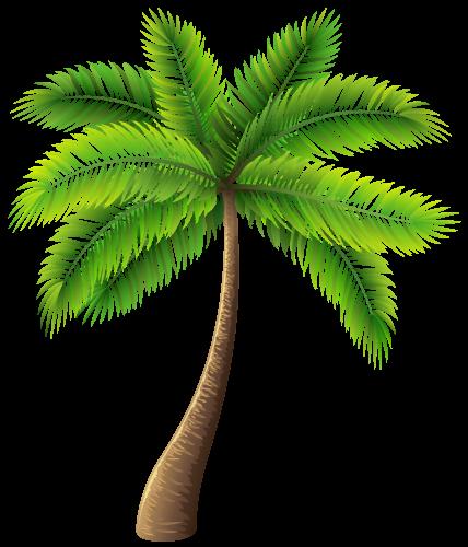 PNG HD Palm Tree Beach - 141582