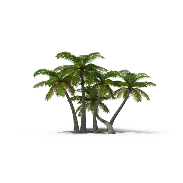 PNG HD Palm Tree Beach - 141589