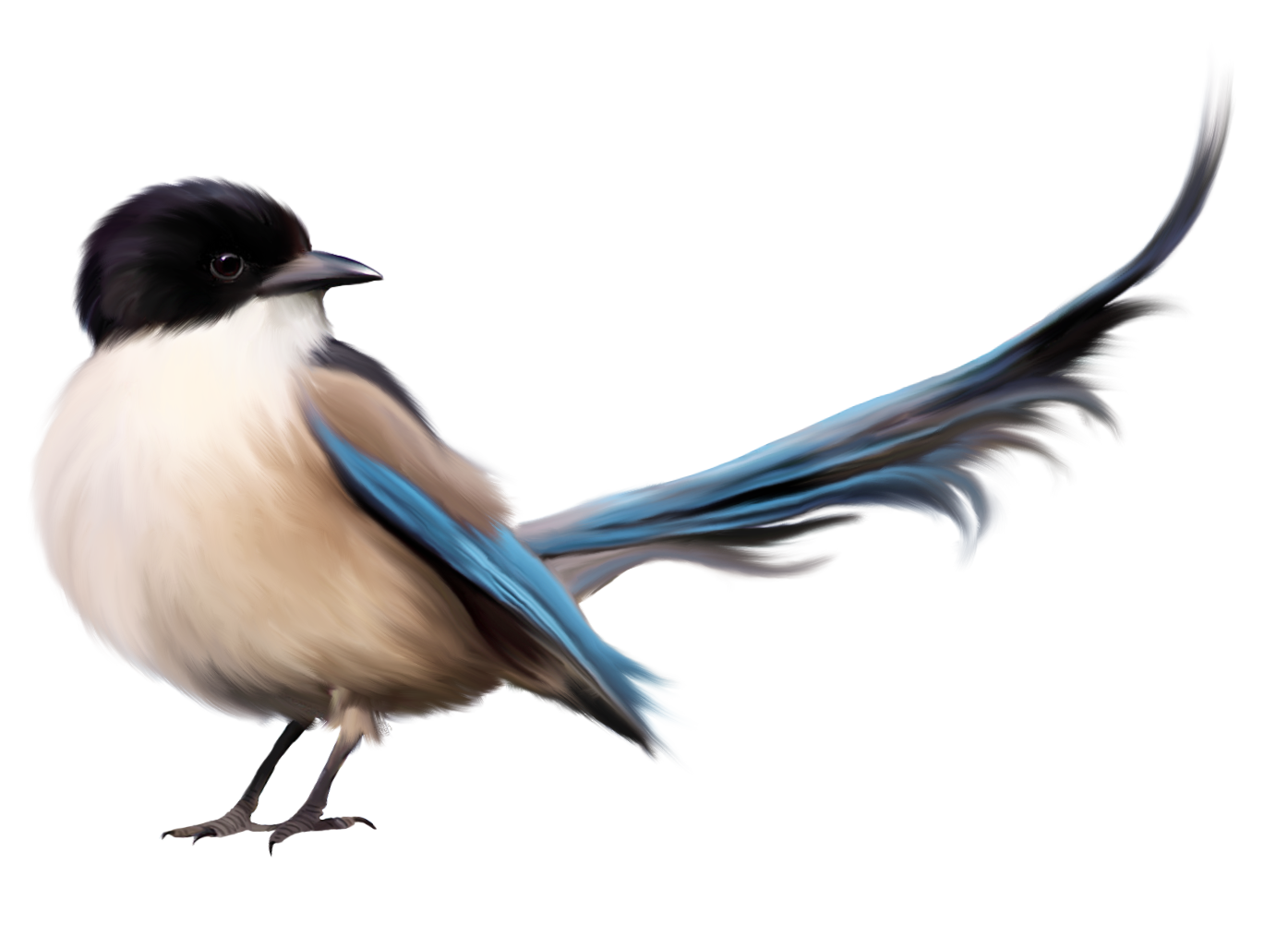 PNG HD Pictures Of Birds - 127748