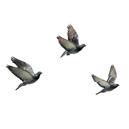PNG HD Pictures Of Birds - 127754