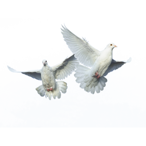 PNG HD Pictures Of Birds - 127759