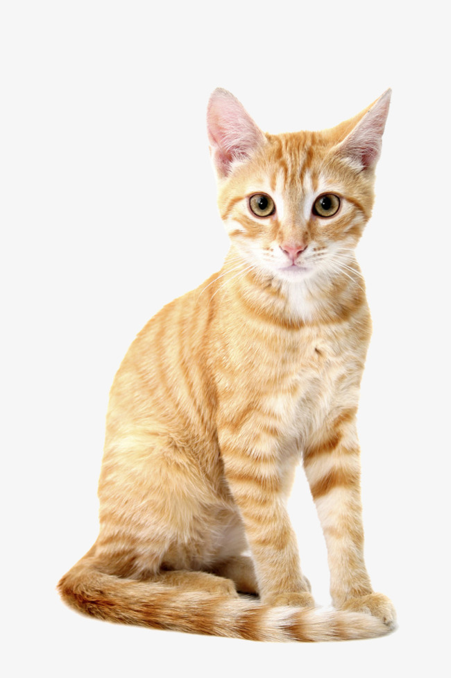 PNG HD Pictures Of Cats Transparent HD Pictures Of Cats.PNG