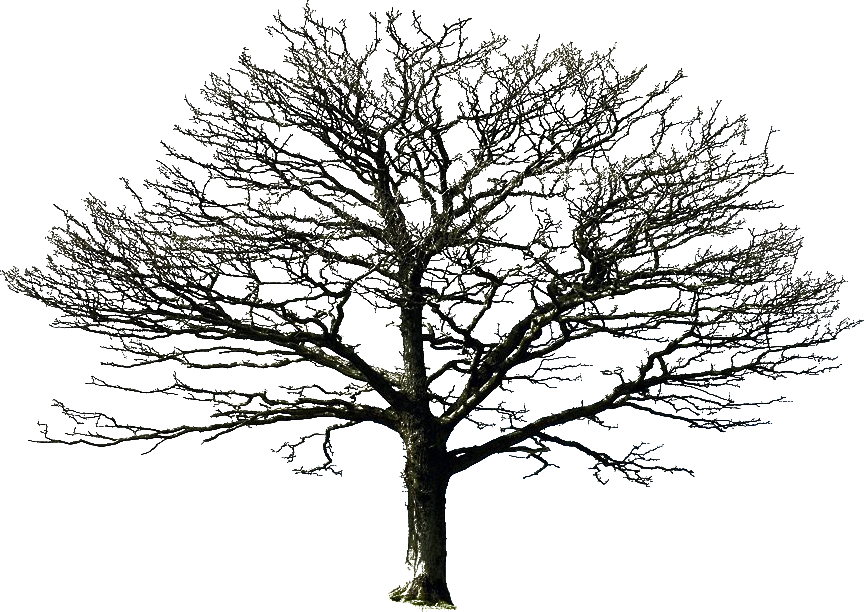 PNG HD Pictures Of Trees - 127666