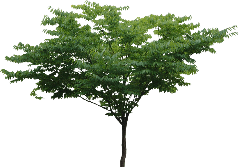 PNG HD Pictures Of Trees - 127661