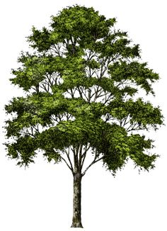 PNG HD Pictures Of Trees - 127668