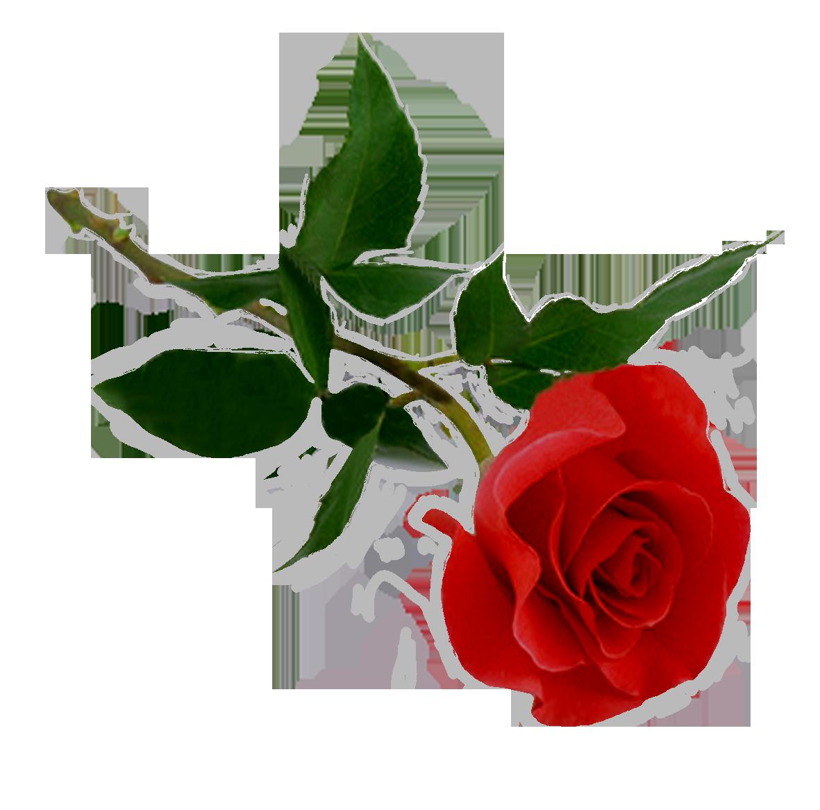 PNG HD Rose - 155202