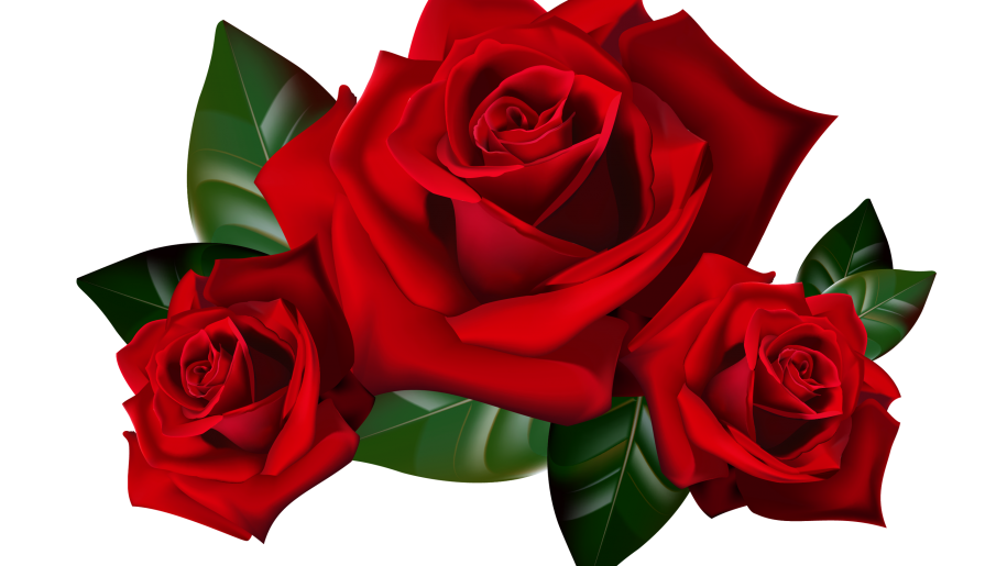 Png hd rose transparent hd roseg images pluspng red roses png clipart picture hd desktop wallpaper widescreen backgrounds for mobile tablet and pc free images download voltagebd Gallery
