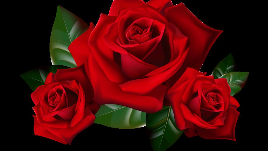 PNG HD Rose - 155196