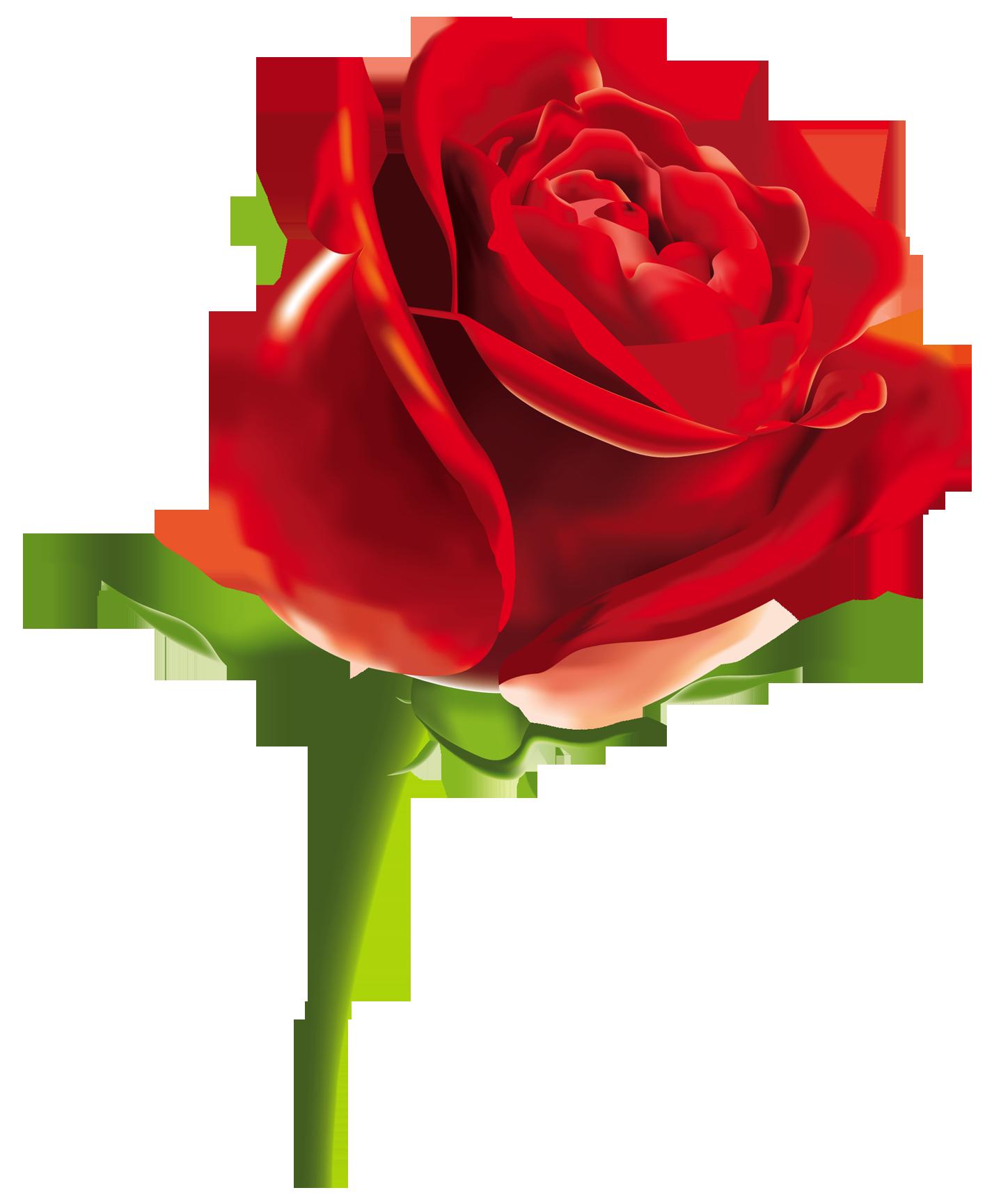 PNG HD Rose - 155205
