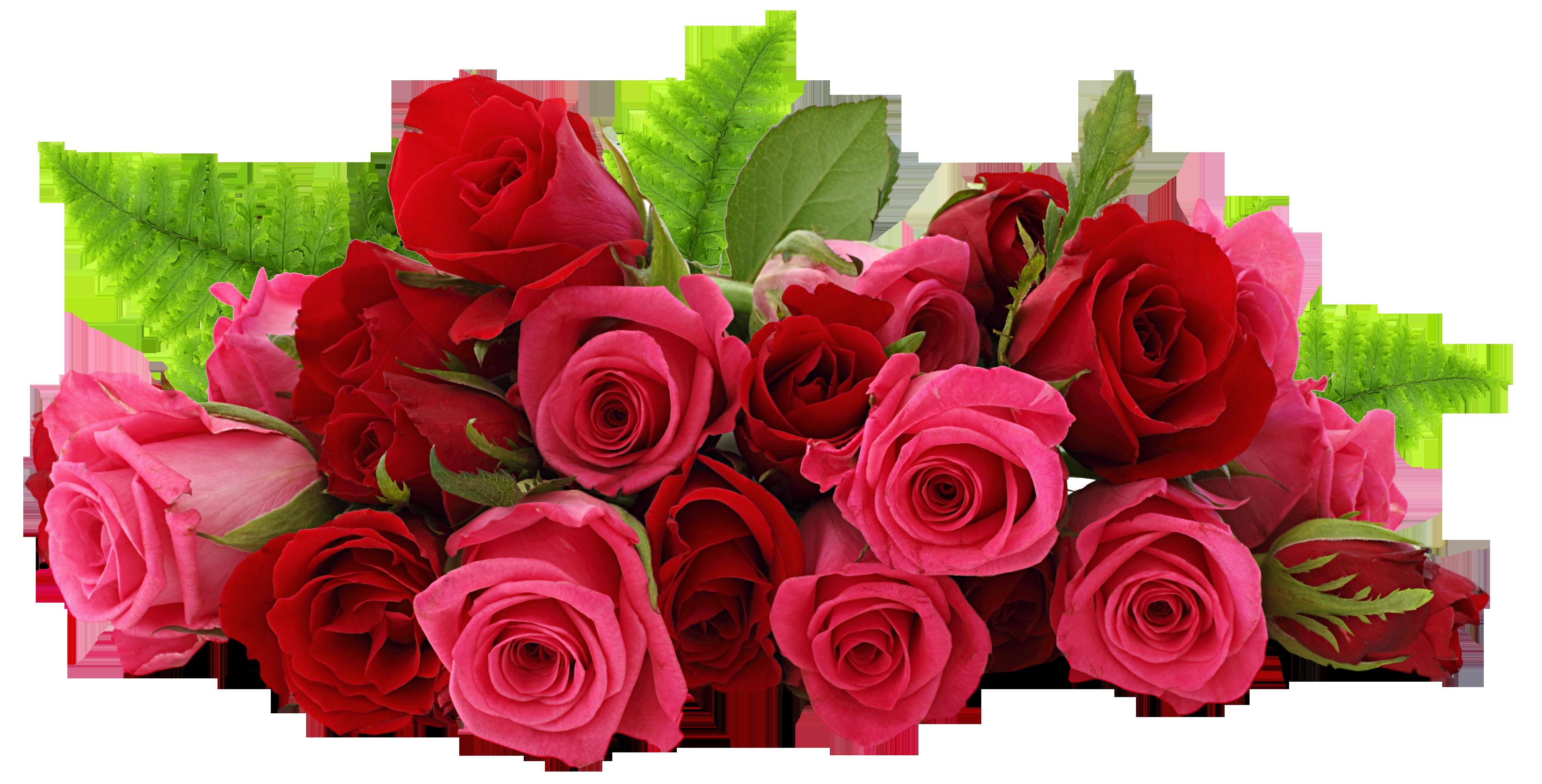 PNG HD Rose - 155204