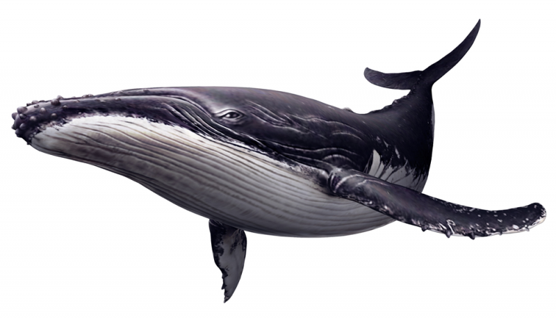 PNG HD Whale - 121890